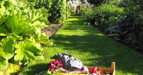 Produce-in-vegetable-Garden