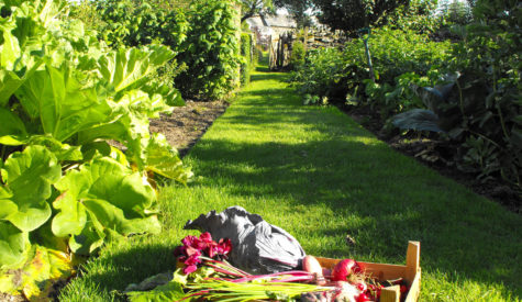 Produce-in-vegetable-Garden