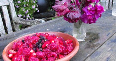 Raspberries-wild-strawberries-and-mulberries